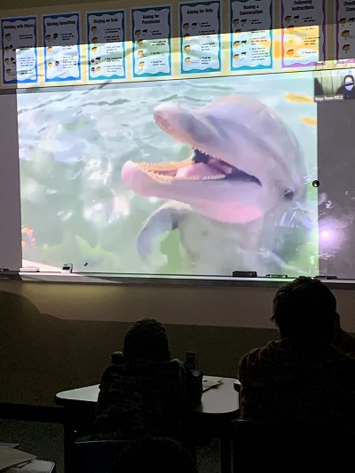 class observing dolphins